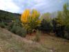 47 Paisaje Otoñal.jpg
