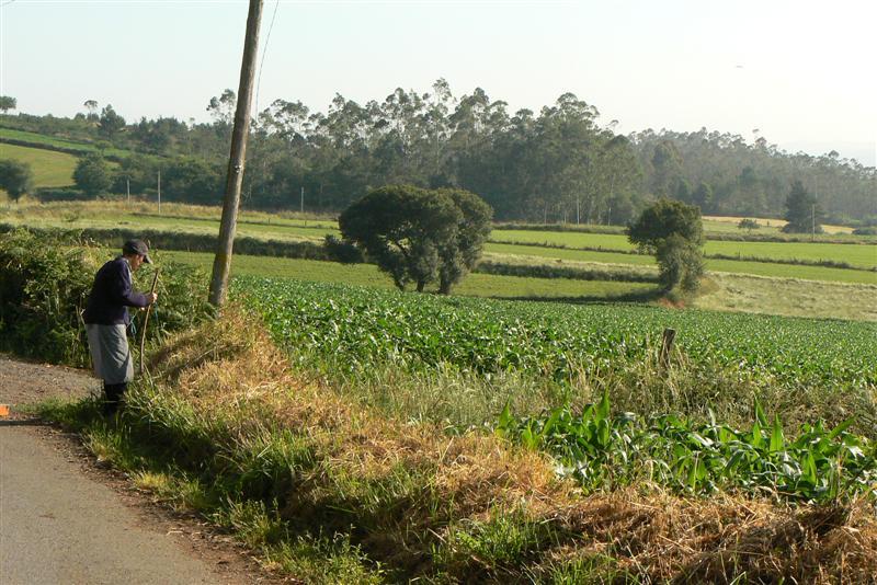 333-estampa-rural