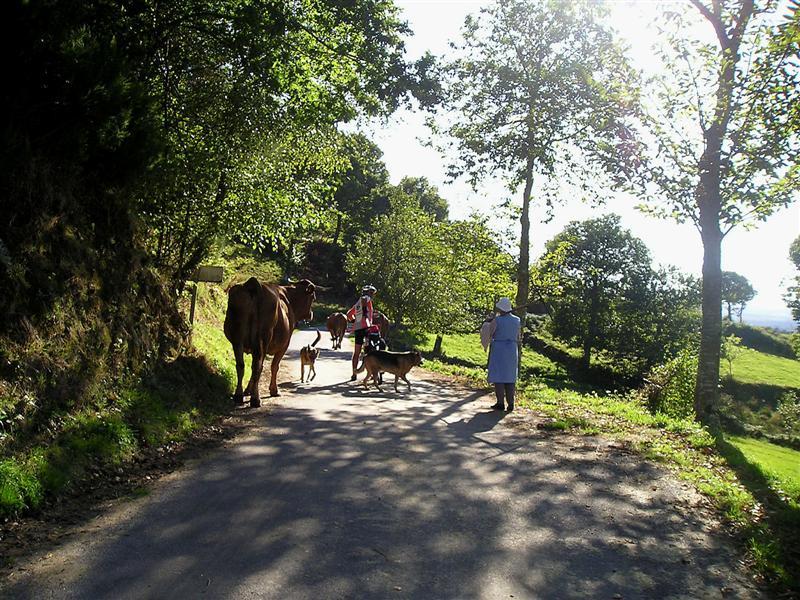 Camino Castro Dozón