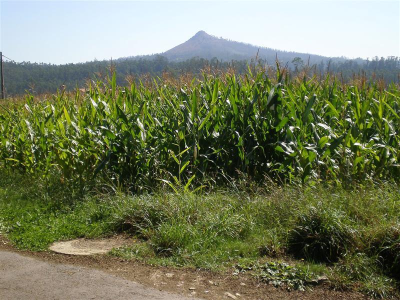 Boqueixon-pico Sagro