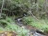 El rio nos acompaña